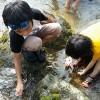 夏休み子供だけの自然体験ツアーを自由研究に小学生でも関東なら安心