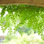 グリーンカーテン初心者におすすめの花とプランターの大きさ苗の数