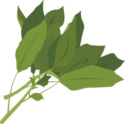夏バテ防止にモロヘイヤの簡単な食べ方