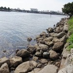 大井ふ頭海浜公園のハゼ釣りポイント 釣り餌の入手先と駐車場