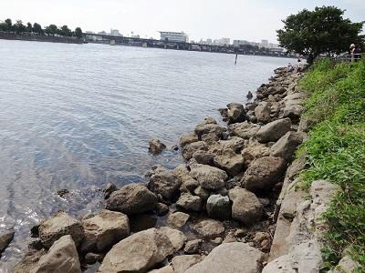 東京湾はぜ釣り人気のスポット