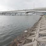 多摩川大師橋のハゼ釣りポイントと駐車場トイレ、遊漁券は必要?