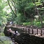 等々力渓谷への最寄り駅や行き方、公園の見所や川遊びベビーカーは?