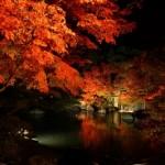 椿山荘の紅葉の見ごろの時期とライトアップとアクセスのいい最寄り駅