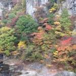 養老渓谷の紅葉の子供連れにおすすめのハイキングコースと日帰り温泉