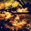 鎌倉の長谷寺の紅葉が見ごろの時期とライトアップの時間、混雑状況