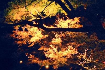 鎌倉の紅葉混雑する場所と時間