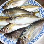 ふれーゆ裏でサビキ釣り、アジのサイズと初心者おすすめの仕掛けと餌