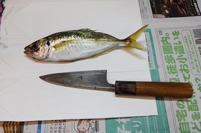 魚アジの捌き方