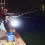 千葉県富津新港で車横付けでサビキ釣りアジの夜釣りの釣果と釣り場情報