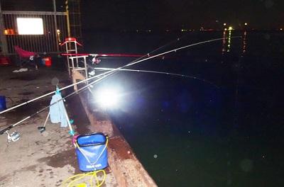 夜釣り海に点燈