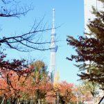 東武スカイツリーライン曳舟駅周辺の住みやすさ!買い物や子育て施設が充実