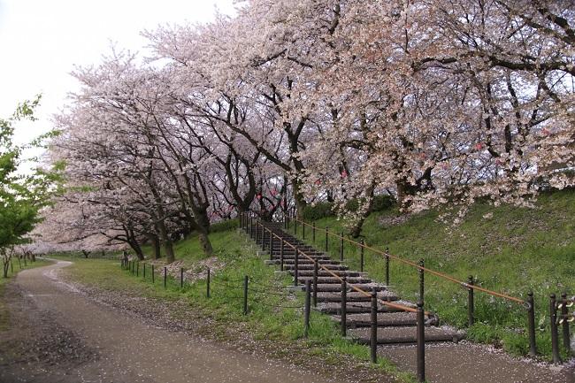 権現堂公園桜まつりベビーカー