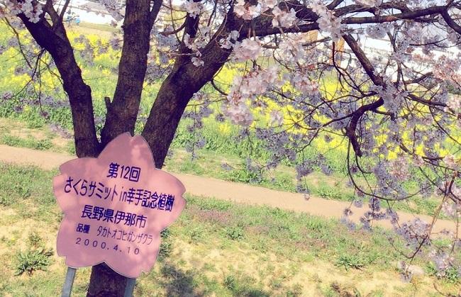 権現堂公園の全国の桜コーナー