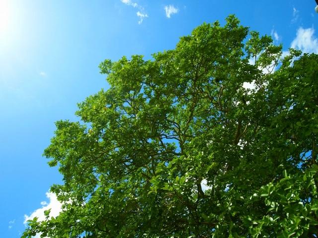 処暑の候の使い方